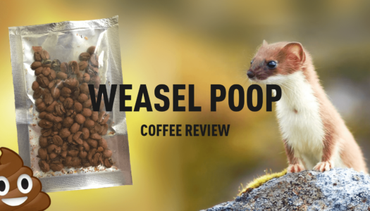 Weasel Poop (Kopi Luwak) Coffee Review
